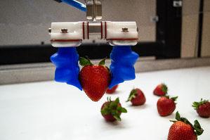 mgrip strawberry1